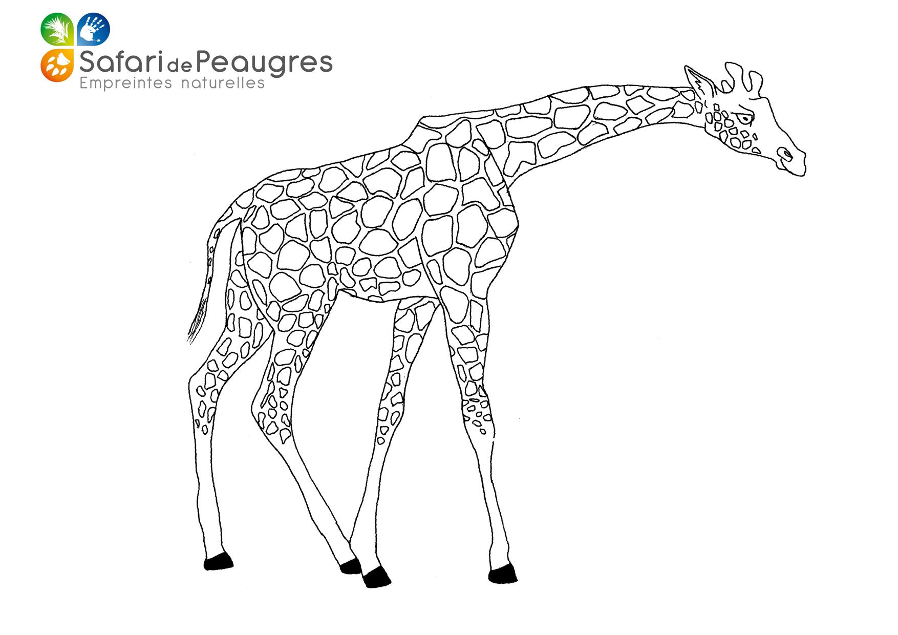 Coloriez Les Animaux Du Safari De Peaugres Safari De Peaugres