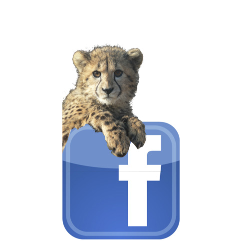 facebook safari peaugres