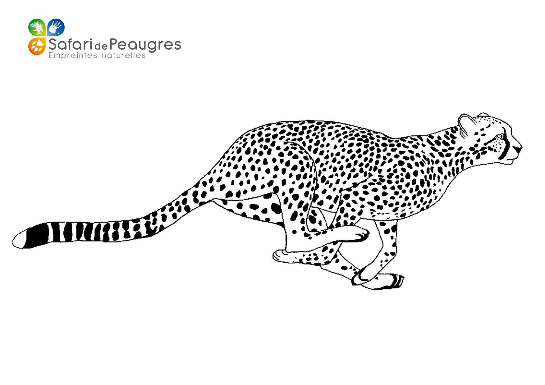 Coloriez les animaux du Safari de Peaugres ! | Safari de ...